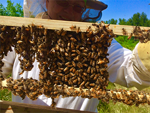 beekeeping for summer care